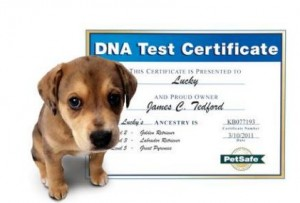 SkyMall Doggy DNA