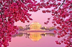 Washington-D.C.