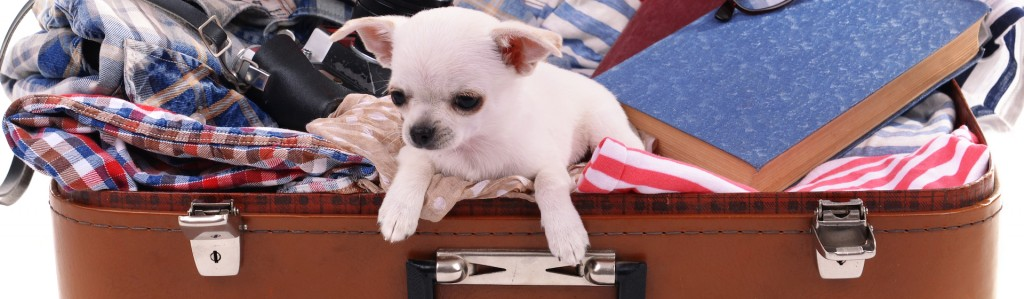 Puppy-in-Suitcase-1024x299