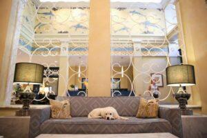 dog kimpton hotel