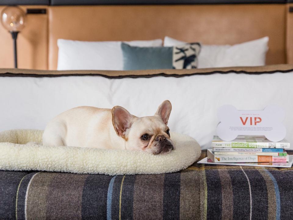 dog provenance hotel