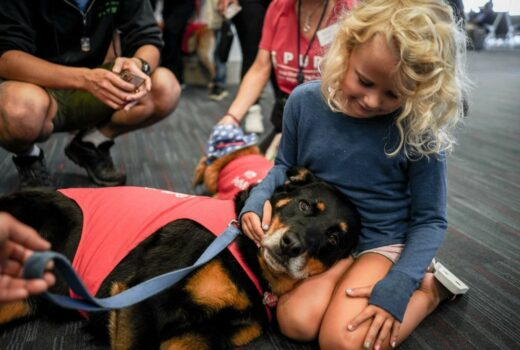 US airport therapy dogs